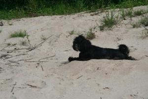 pies w kajaku IMG_1350