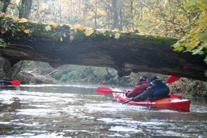 rzeka widawa kajak IMG_9530